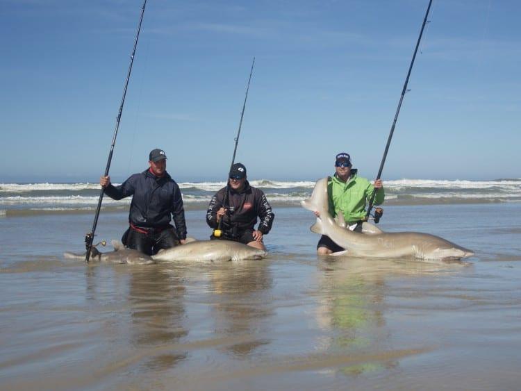 Three rods, three sharks! _1230466