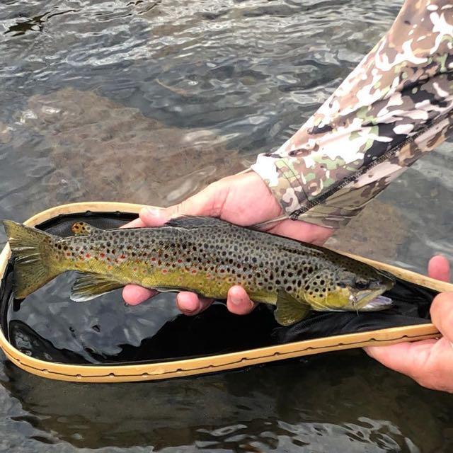 Late season, Mooi river brown trout