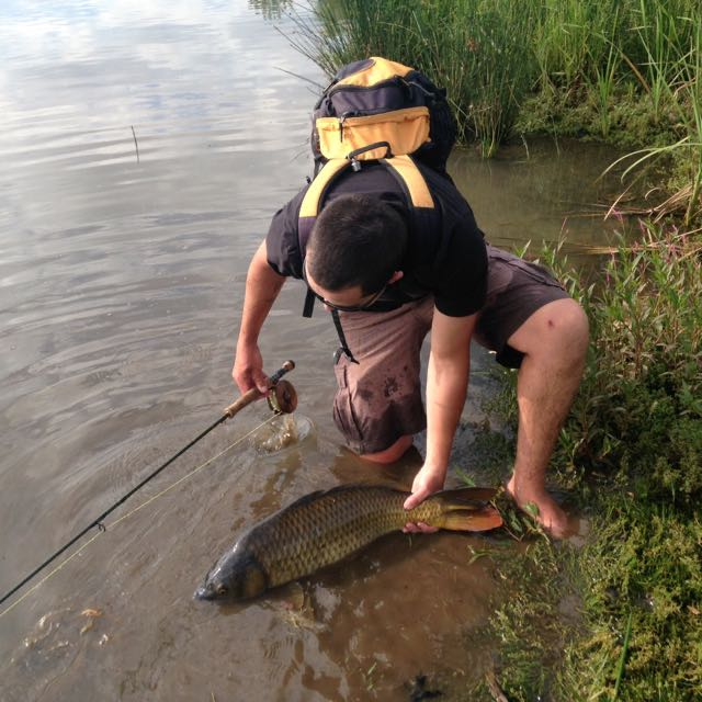 One from back in the day. Tailing carp on fly is one of my favorite fish to catch!