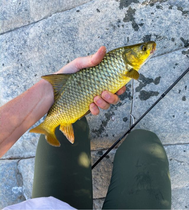 This little guy was caught and safely released.