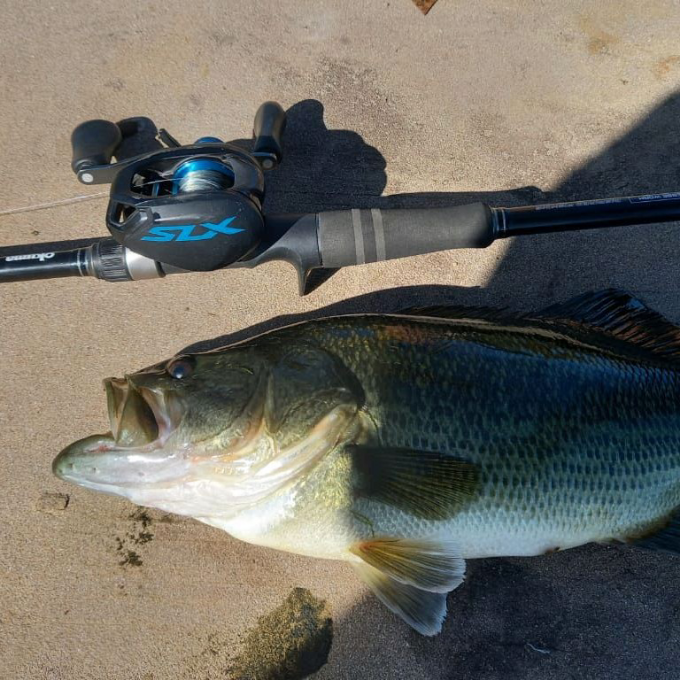 Lella large mouth bass of 1.1kg and was successfully released